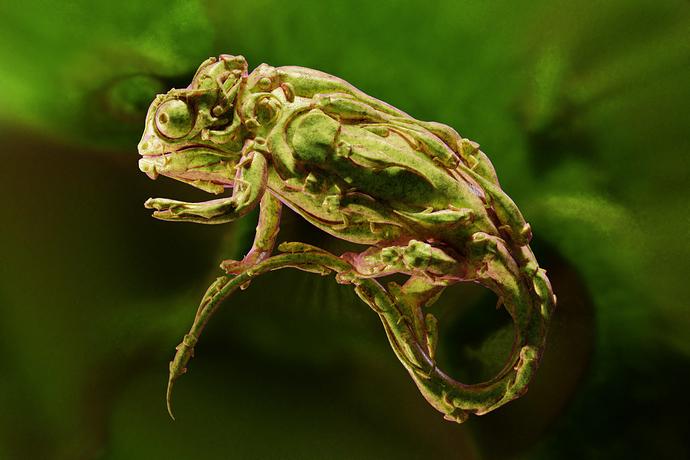 chameleon01_helge