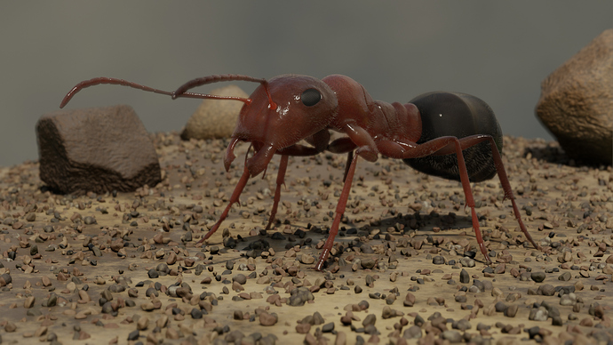 ant_final_01