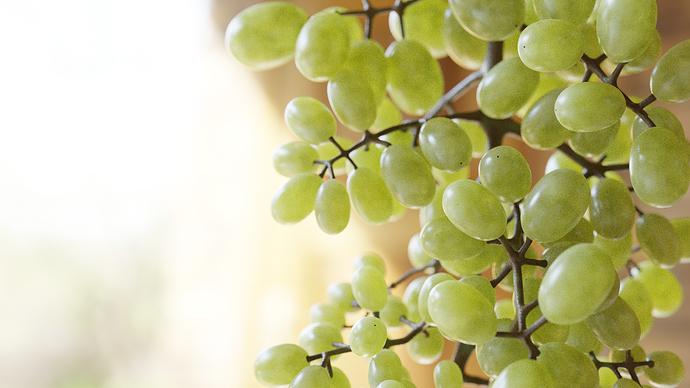 Grape_test0001