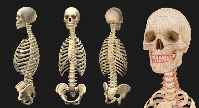 szkielet_kobieta_wip_1