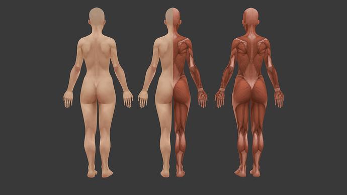 dziewczyna_anatomia_full_2%20