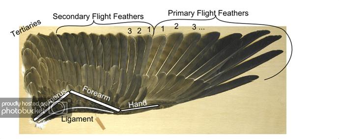 http://i132.photobucket.com/albums/q20/jaredr122/wing/wingdiagram.png
