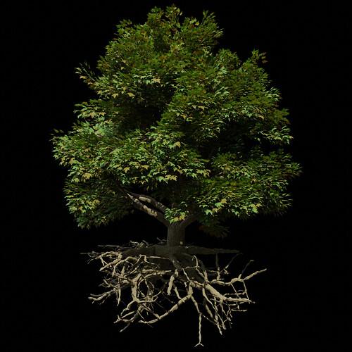 M_Tree_A_010075