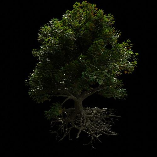 M_Tree_A_010225