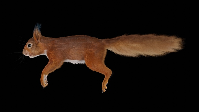 Squirrel_Osipkov_03