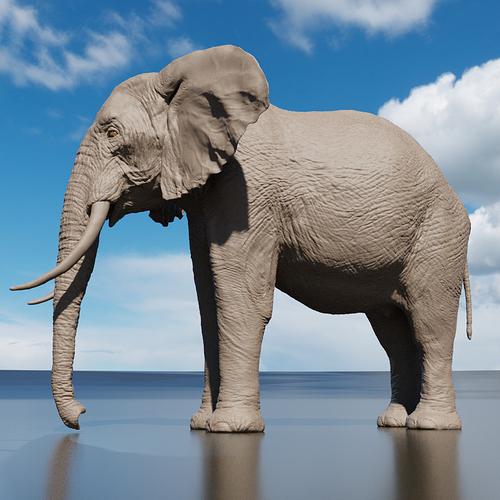 elefante_perfil_b