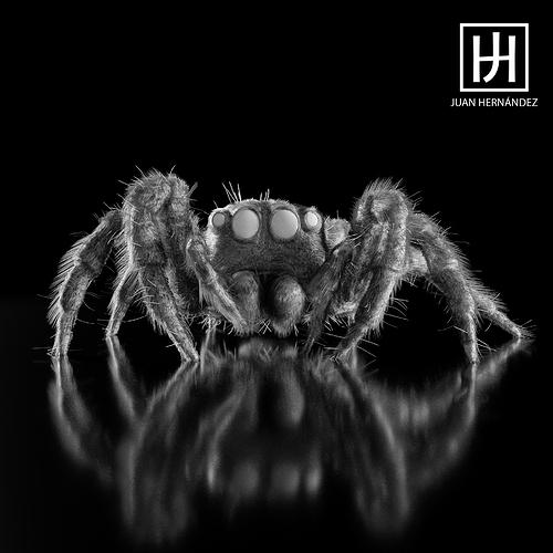 Spider_bnw