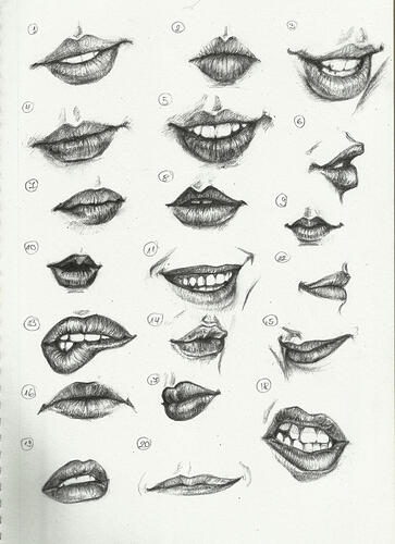 FEMALE MOUTH PARTS