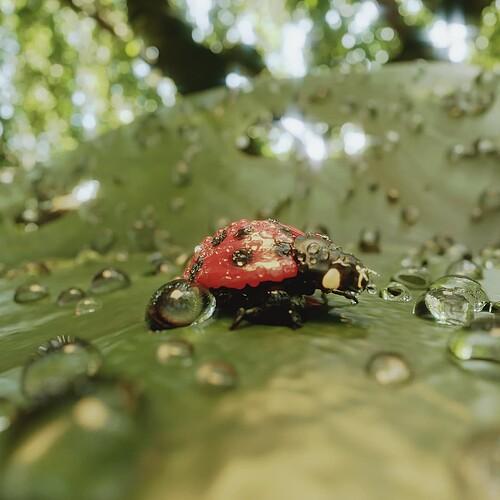 wesley_vanroose: Ladybug in the rain