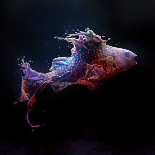 FishSplash1