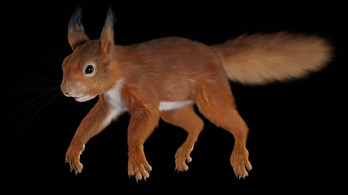 Squirrel_Osipkov_02