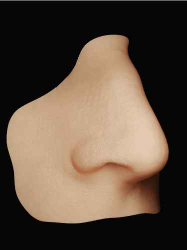 nosewip_optimized