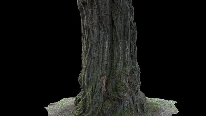 tree_06_test_01