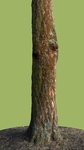 Tree_05_decent_version_002