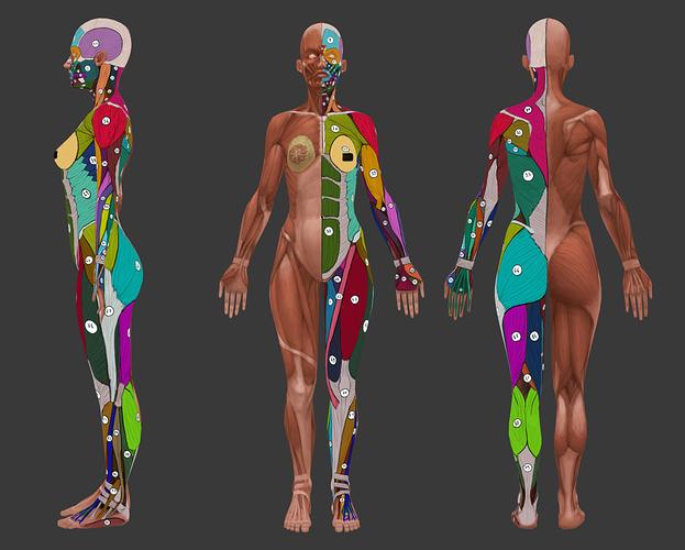 anatomia_kobieta