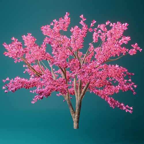 magnolia tree 1