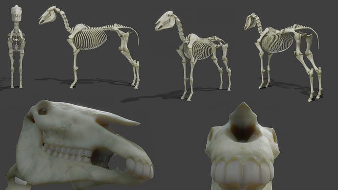 RealisticHorse_Skeleton_WIP08