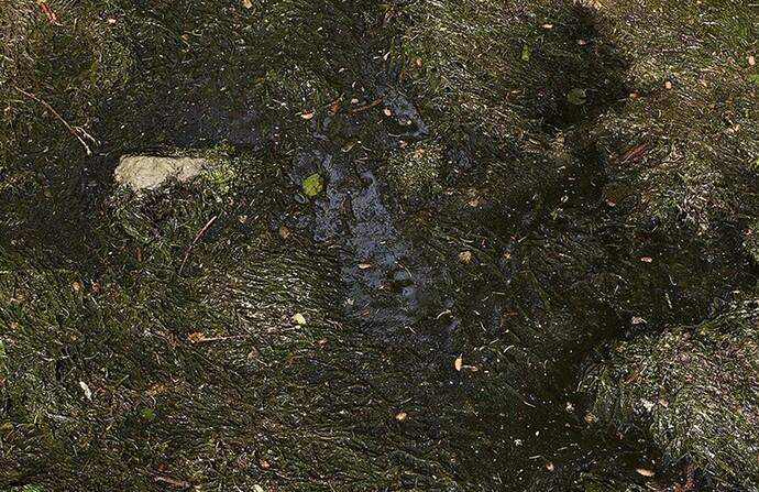 Moss-Bog-Quixel