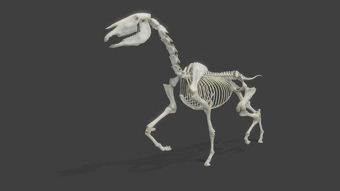 RealisticHorse_Skeleton_WIP13