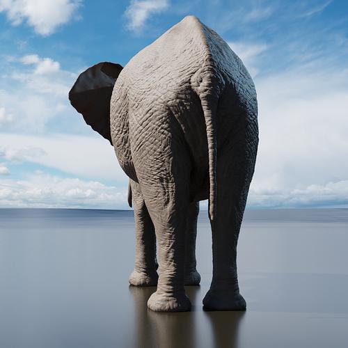 elefante_BACK