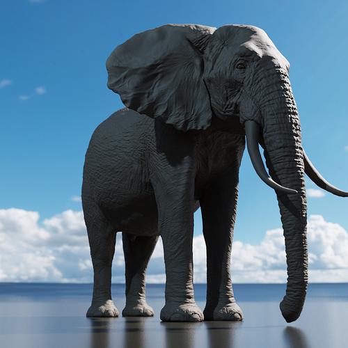 elefante_perfil_c