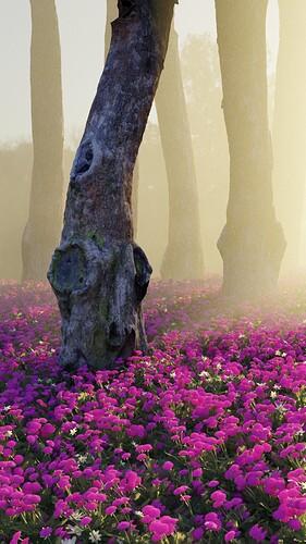 joseph-farah-tree-lilacs-test2