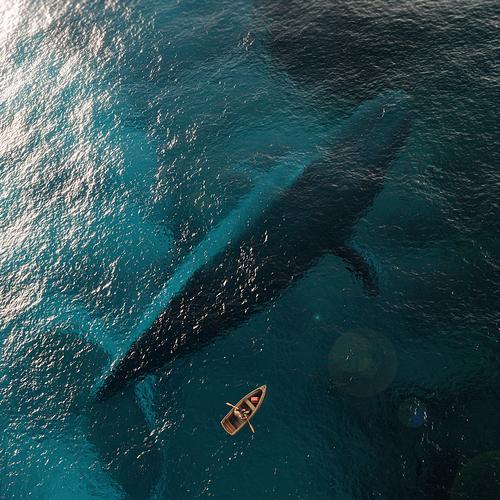 whale%20edited_but%20jpeg