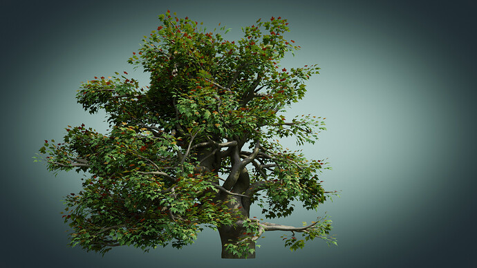 Old_Tree_A_010150