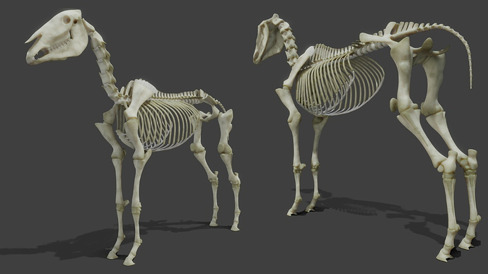 RealisticHorse_Skeleton_WIP10