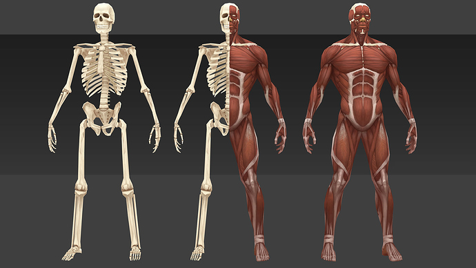 Low_poly_anatomia