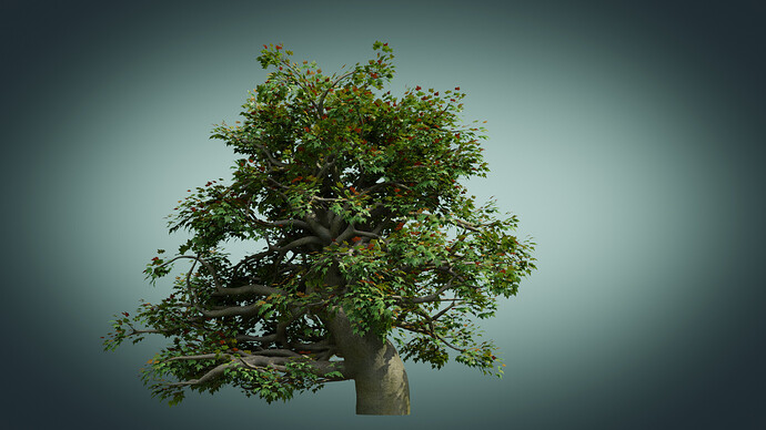 Old_Tree_A_010075