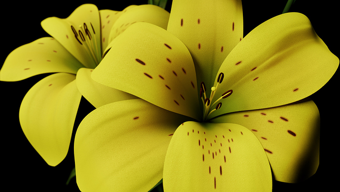 006_Lily_View