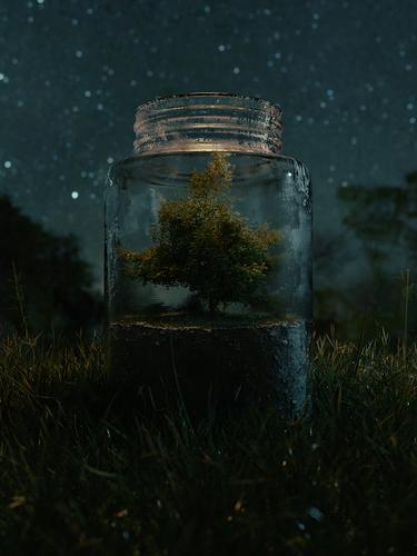 Tree_In_A_Jar2