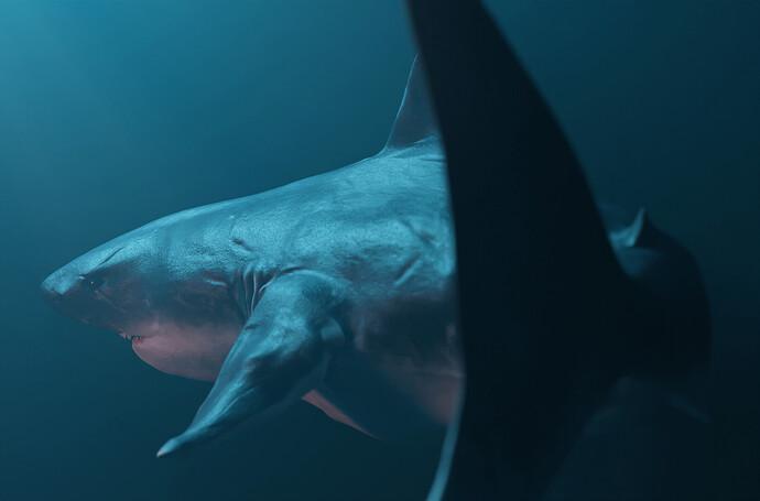 Shark 6 Best Editted