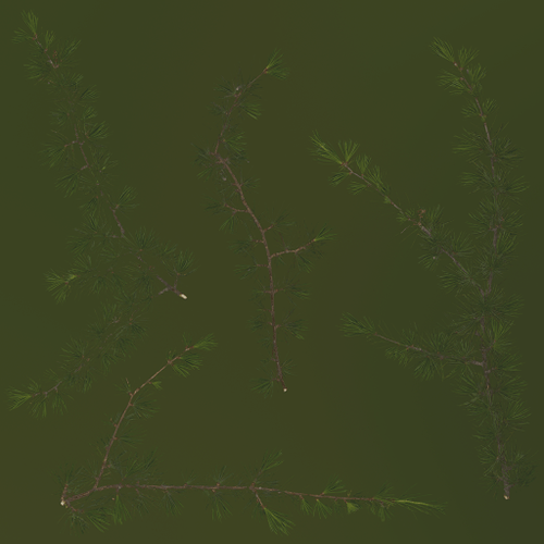 fir_tree_boughs_Diffuse