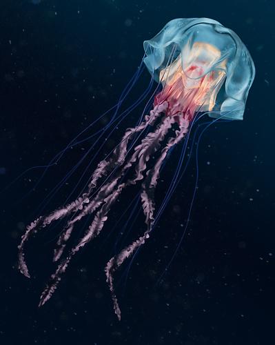 Jellyfish-LR