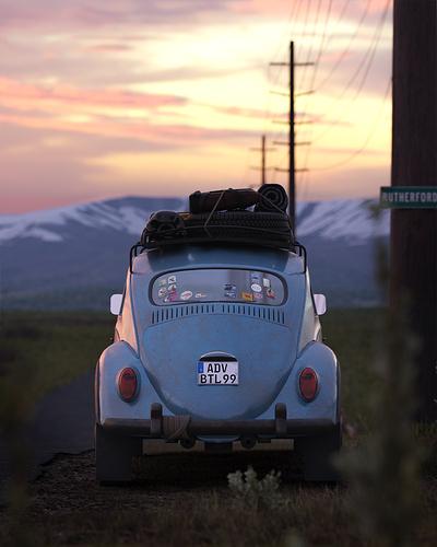 Roadside Beetle #4
