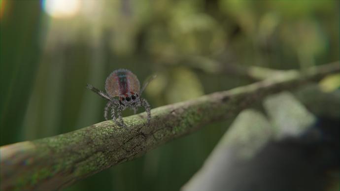 PeacockSpider_WIP09