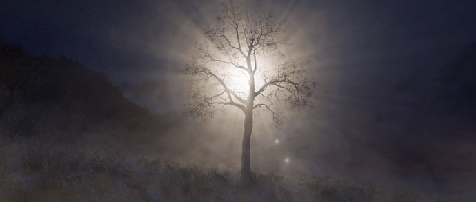 03-Lonely Tree