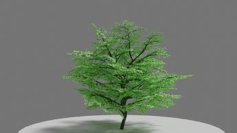 tree_manual_1