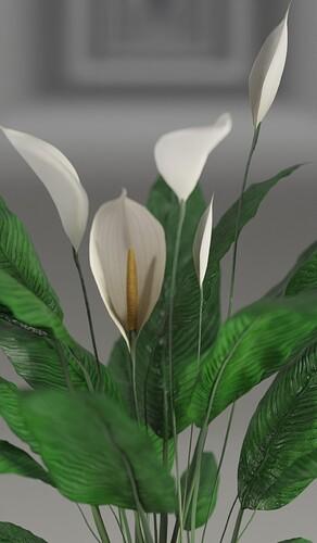 Lilly flower 1