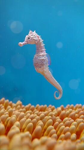 Animal - hippocampe resize