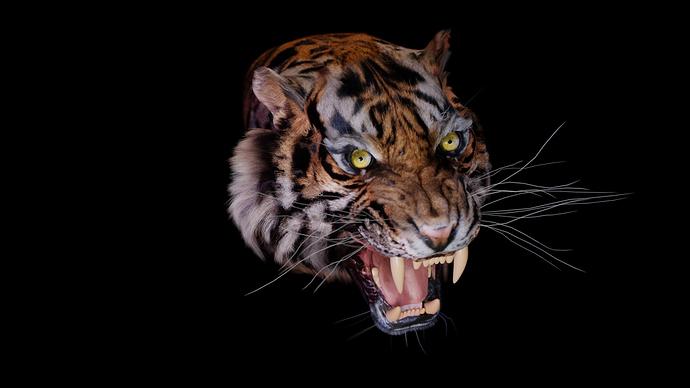 Tiger with eyes, teeth and tongue