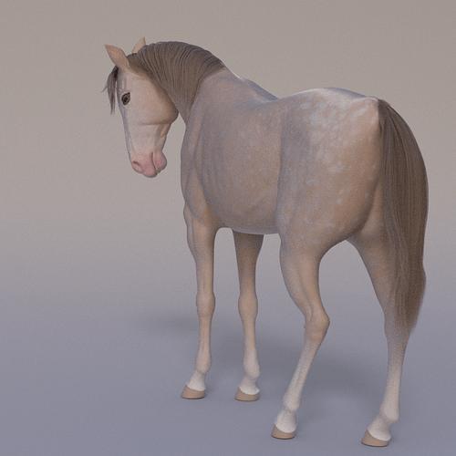 horse-portrait-3