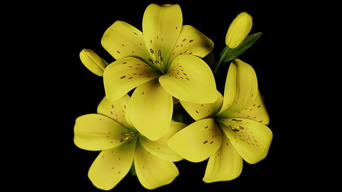 002_Lily_View
