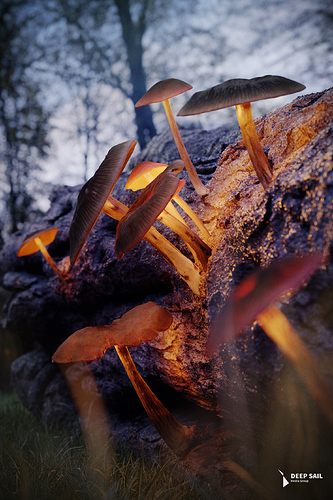 mushrooms_social_scaled