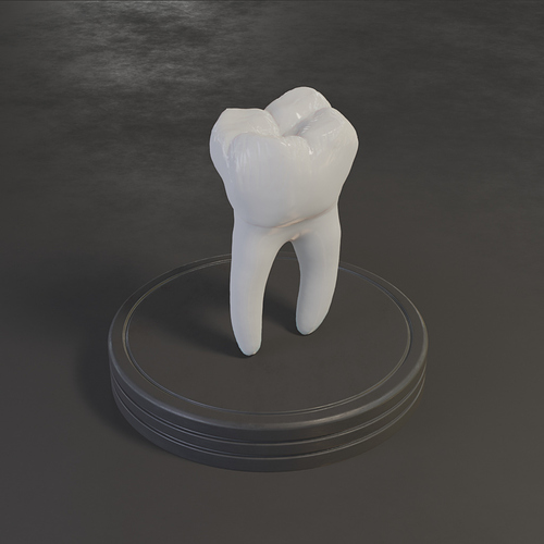 day05_tooth