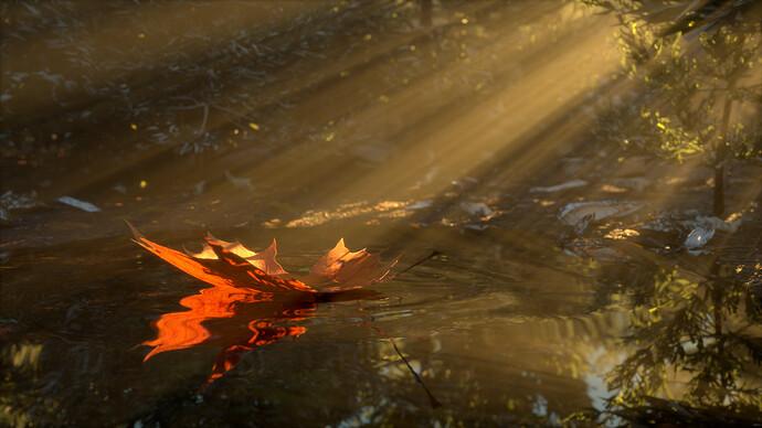 leaf puddle ripples