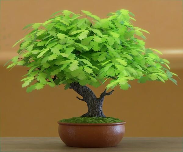 bonsai 03