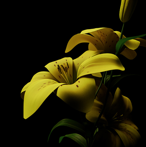 001_Lily_View